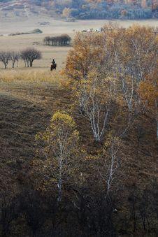 Free Bashang Grassland In Inter-Mongolia  Of China Royalty Free Stock Image - 6655016