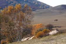 Free Bashang Grassland In Inter-Mongolia  Of China Royalty Free Stock Images - 6655069