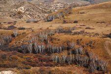 Free Bashang Grassland In Inter-Mongolia  Of China Royalty Free Stock Photos - 6655298