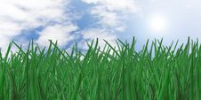 Free Grass Stock Photos - 6655383