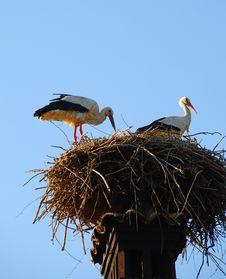 Free Storks Stock Image - 6655401