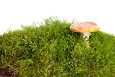 Free Mushroom A Fly-agaric Stock Images - 6655484