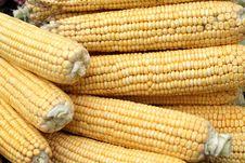 Free Heap Of Yelloy Indian Corn Stock Photography - 6655542