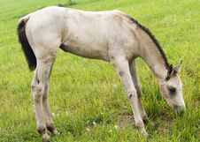 Free White Horse Against Green Grass Stock Photography - 6656422