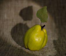 Free Green Quince Stock Photos - 6657303