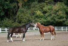 Free Two Horses Stock Photography - 6657452