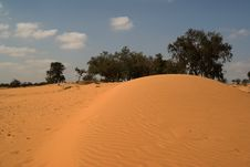 Free The Desert Trees Stock Photography - 6657562