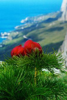 Free Travel On Mountains Royalty Free Stock Photos - 6658218