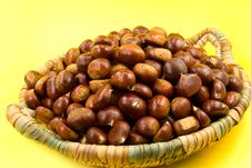 Free Many Ripe Chestnuts On Yellow Background Stock Photos - 6658793