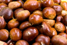 Free Many Ripe Chestnuts On Yellow Background Stock Photo - 6658800