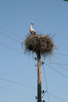 Big White Stork On The Nest . Royalty Free Stock Images