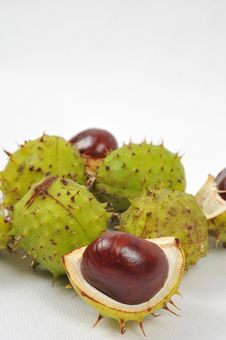 Free Chestnuts Series, Fall Is Coming Royalty Free Stock Image - 6659416