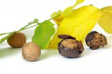 Free Fresh Walnut And Leaf Royalty Free Stock Photo - 6659495