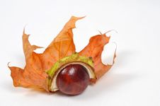 Free Chestnut And Leaves, Fall Is Coming [2] Royalty Free Stock Image - 6659546