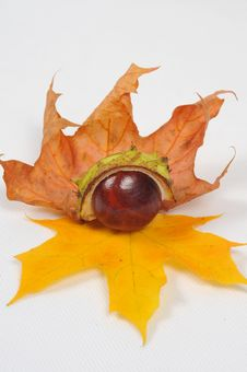 Free Chestnut And Leaves, Fall Is Coming [2] Stock Photo - 6659570