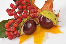 Free Chestnuts And Leaves, Fall Is Coming Stock Photography - 6659752
