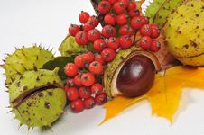 Free Chestnuts And Leaves, Fall Is Coming Royalty Free Stock Photo - 6659925