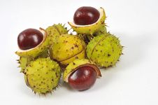 Free Chestnuts Series, Fall Is Coming [3] Royalty Free Stock Images - 6659959