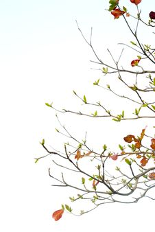 Free Sea-almond Tree Stock Photos - 66596563