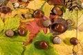 Free Autumn Background Stock Photo - 6660800