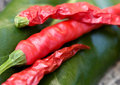Free Red Hot Chili Peppers Stock Photo - 6665480