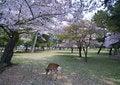 Free Deer In Garden Stock Photo - 6667050