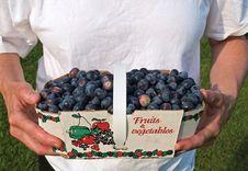 Free Freshly Picked Blueberries Stock Photos - 6660083