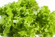 Free Lettuce Leaves Royalty Free Stock Image - 6660586