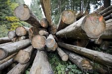 Free Woodpiles In Forest Stock Photos - 6661493
