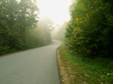 Free Road Leads To Foggy Forest Royalty Free Stock Image - 6661586