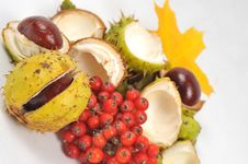 Free Conkers And Leaves, Fall Is Coming Stock Images - 6661694