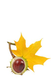 Free Chestnuts Series Stock Photo - 6661820