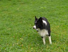 Free Dog Royalty Free Stock Photos - 6661848