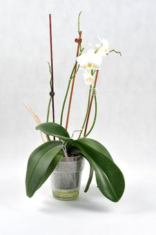 Free White Orchid, Spa Time Stock Image - 6662131