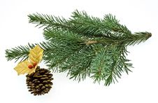 Free Fir Tree Brench Royalty Free Stock Photography - 6662607