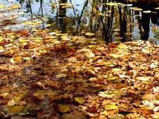 Free Pond With Autumn Leaves Stock Photo - 6664280