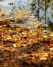 Free Pond With Autumn Leaves Stock Photo - 6664300