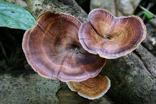 Free Mushroom_2 Stock Image - 6665361