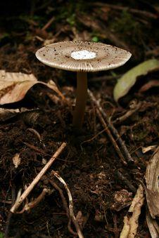 Free Mushroom Stock Images - 6665374