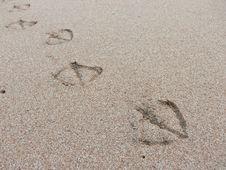 Free Footprint Stock Photo - 6666860