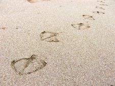 Free Footprint Royalty Free Stock Images - 6666959