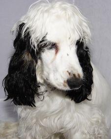 Free Dogs Head Stock Photo - 6667290