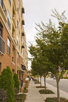 Free Tree Lined Sidewalk Stock Photo - 6668400