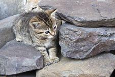 Free Little Cat Stock Photo - 6668740