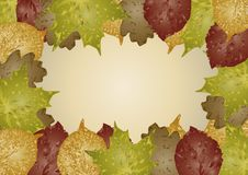 Free Autumn Leaves Background Royalty Free Stock Photo - 6669355
