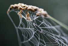 Free Cobweb On Grass Stock Photography - 6669872