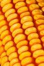 Free Corn Stock Photos - 6675963