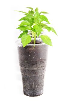 Free Young Plants Royalty Free Stock Photography - 6670917