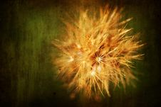 Free Flower With Aged Grunge Texture Royalty Free Stock Image - 6671416