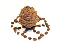 Free Cedar Nut Royalty Free Stock Images - 6673109